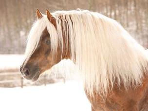 6 NEW Horses: Sales