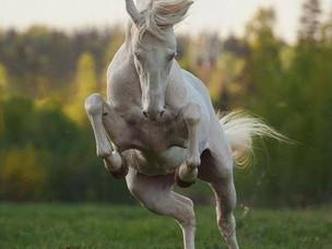 6 NEW Horses!