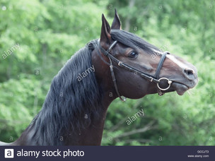 3 New Horses