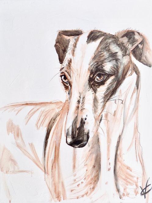 Greyhound Study