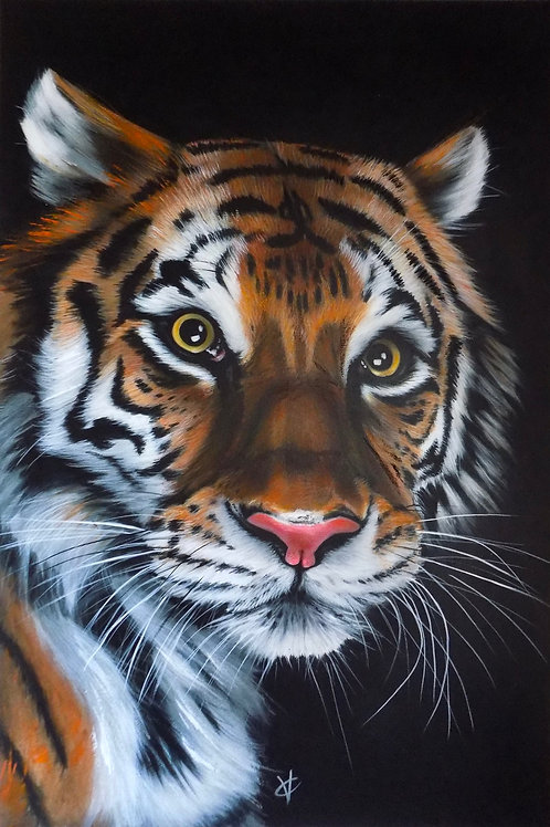 Tiger Tiger In The Night