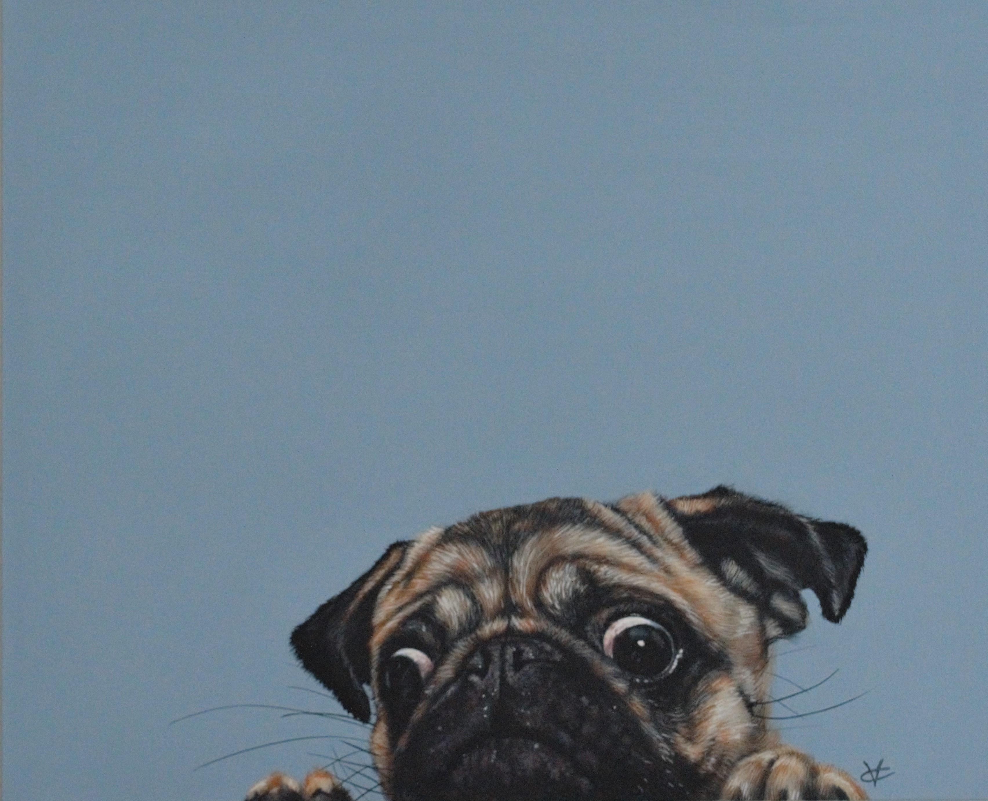Peering Pug