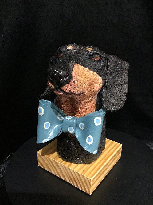 Derek the dapper dachshund