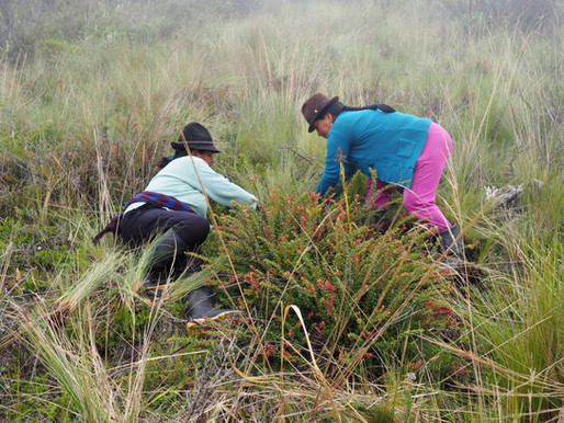 Community enterprise improves Ecuadorians' lives