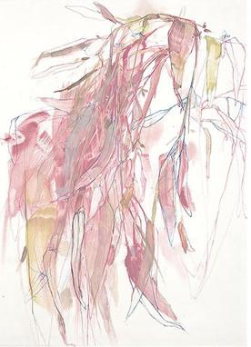 Willow Eucalyptus in Pink.