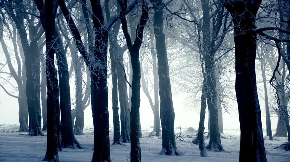 ws_White_Forest_1920x1080.jpg