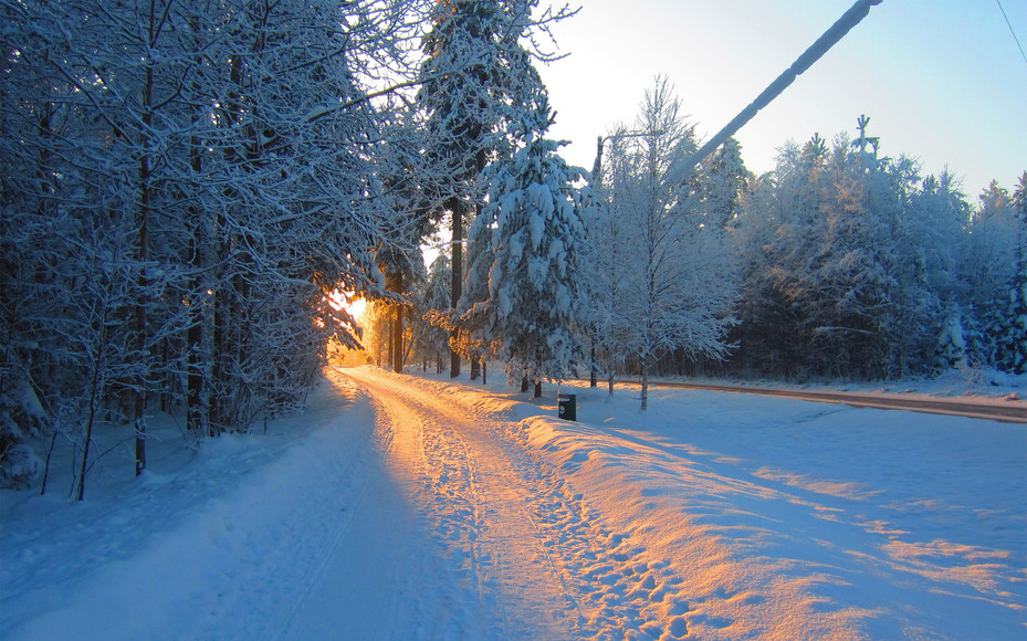 ws_Winter_Road_Forest_Morning_Sun_1920x1