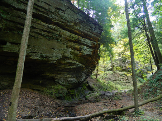 Trail_1,_Shades_State_Park.jpg