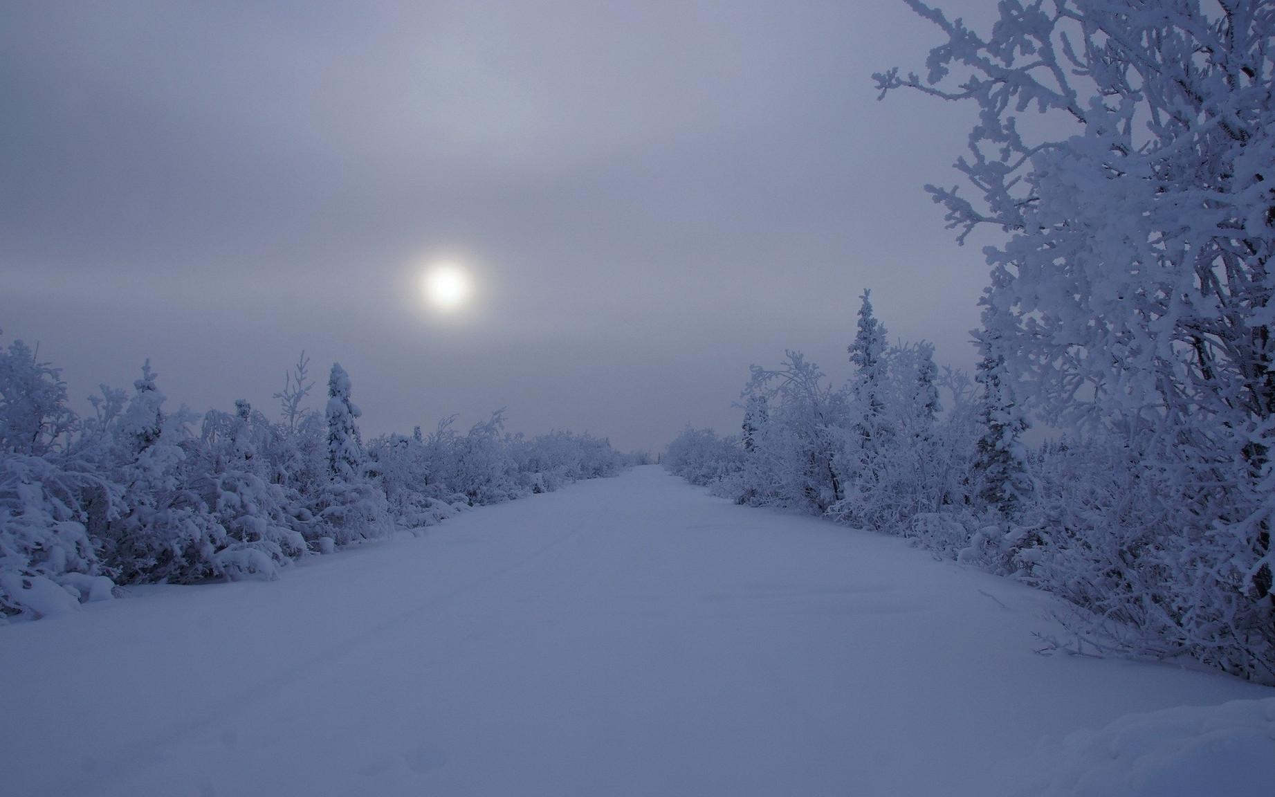 ws_Winter_Road_&_Trees_Night_1920x1200.j