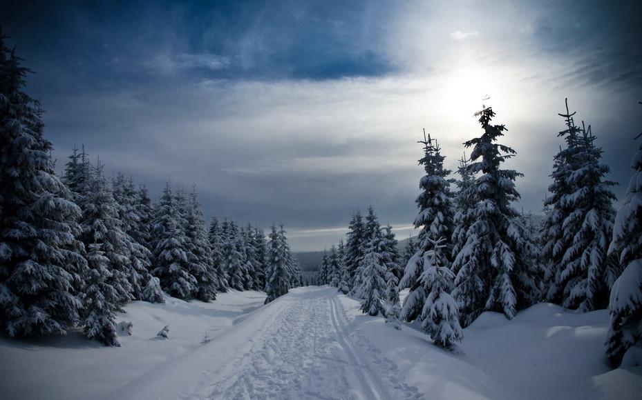 ws_Winter_Forest_Snowy_Path_Sky_1920x120