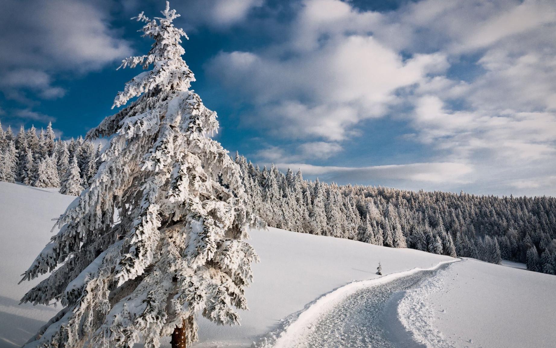 ws_Winter_Trees_Path_Hills_1920x1200.jpg
