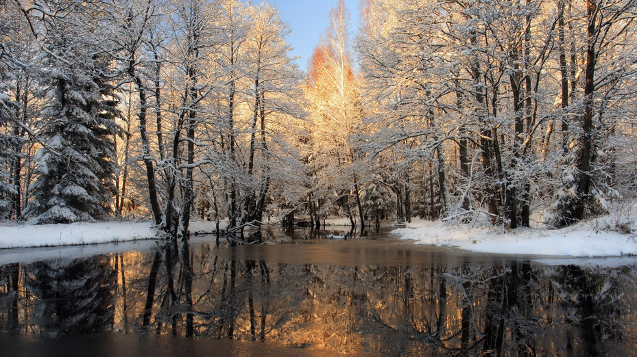 ws_Winter_Trees_Snow_&_Lake_2560x1440.jp
