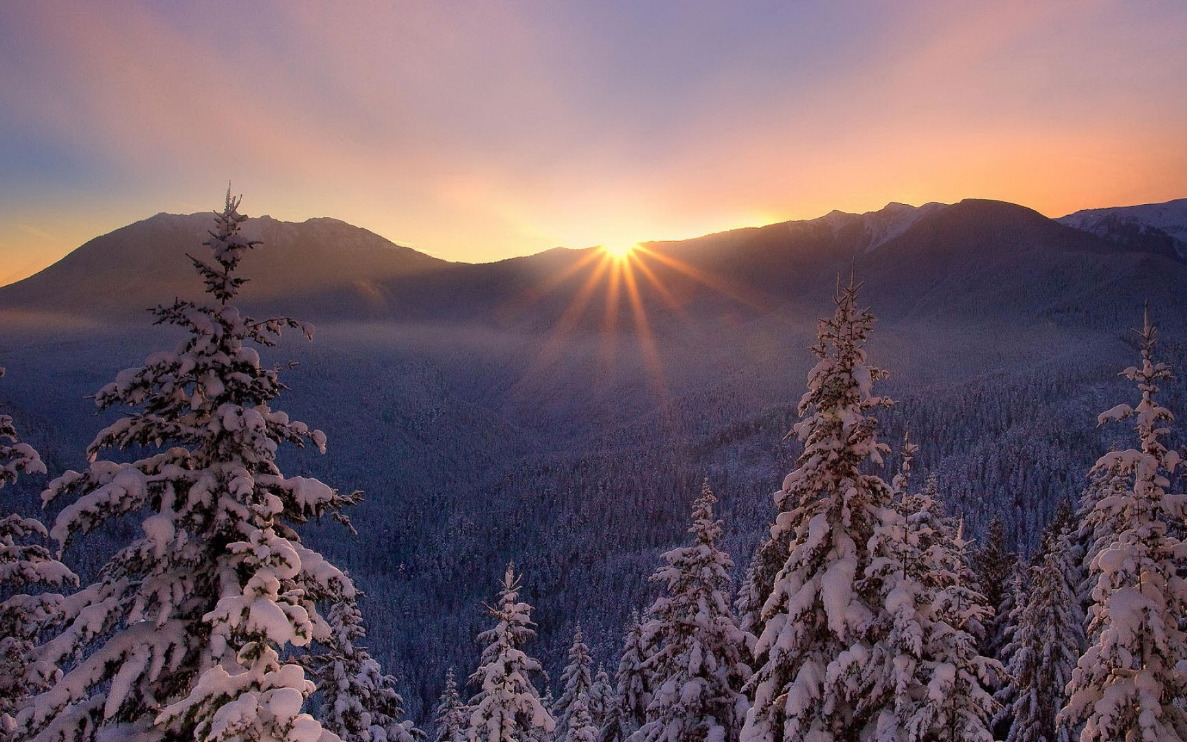 ws_Winter_Forest_&_Shiny_Sunset_1920x120