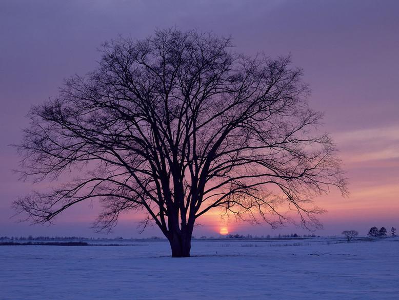 ws_Winter_1024x768.jpg