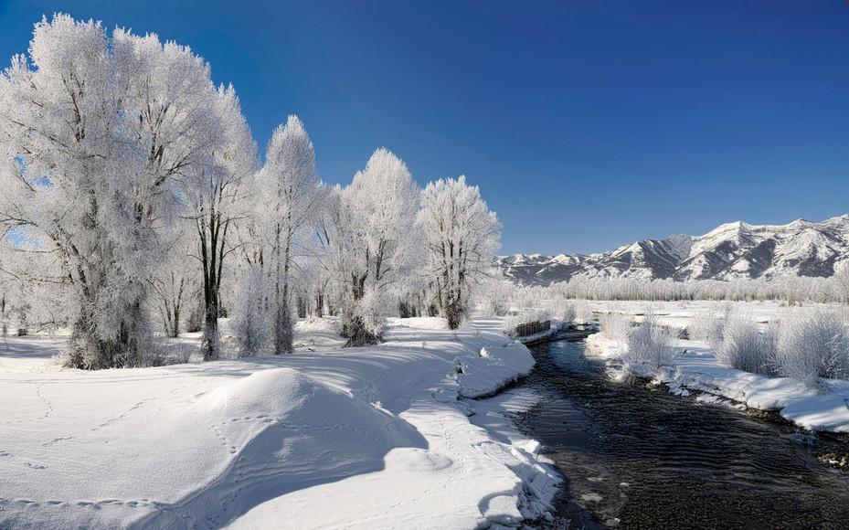 ws_Winter_Trees_Creek_Snowy_Plant_1920x1