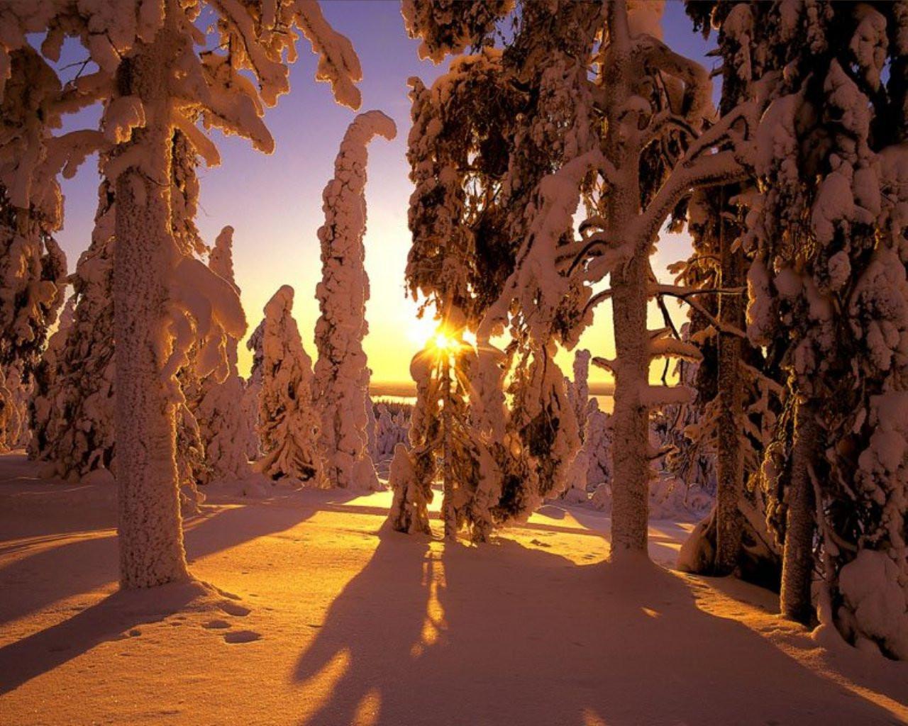 ws_Winter_forest_view_1280x1024.jpg