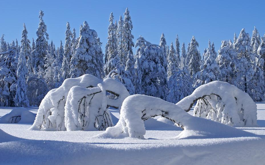 ws_Winter_1920x1200.jpg