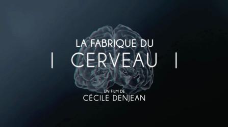La Fabrique de Cerveau • 2017 (52 min)