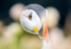 Nikon Influencer Image 4-21.jpg