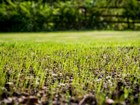 When is it time to Aerate and Seed my fescue lawn?