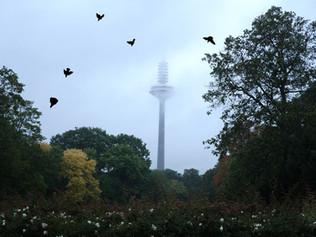 'Hinda Weiss; Frankfurt Notes' at basis Projekraum