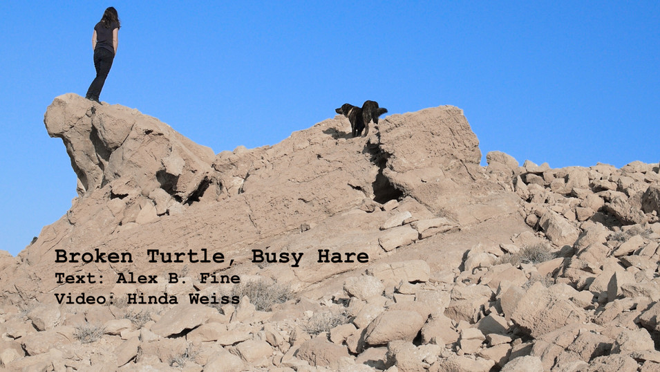 Broken Turtle, Busy Hare