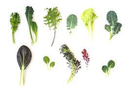C'est quoi ma verdure surprise? Un petit guide d'identification des feuillages