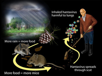 When Donations Could Be Deadly, Hantavirus in Our Community