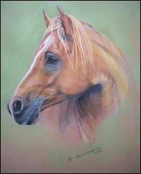 Arabian Horse original pastel painting by Ann Kilminster
