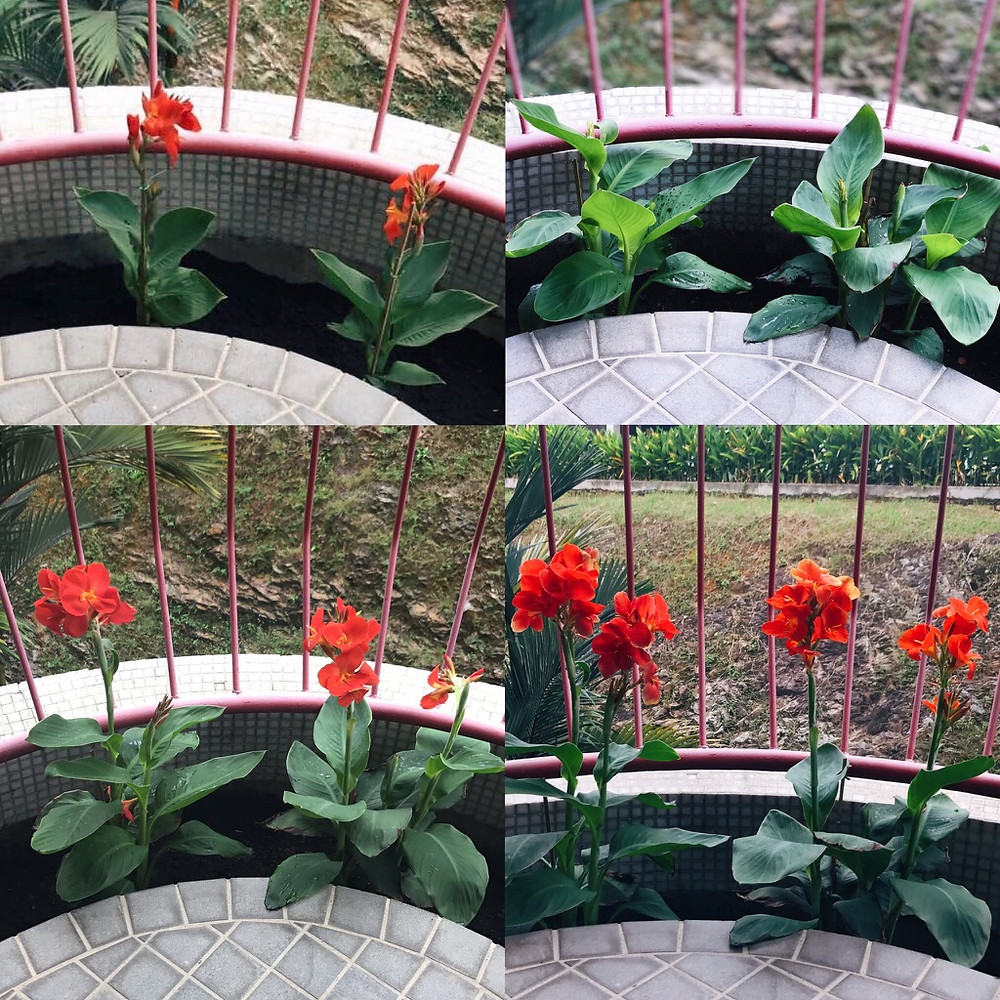 planters box