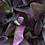 Thumbnail: Hat Box Flowers | The Celina
