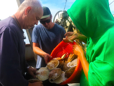 Anchors aweigh for community seafood pilot program