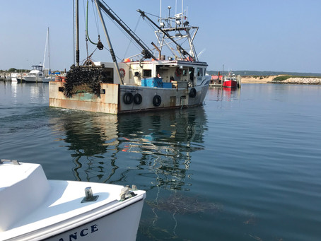 Sam Hopkins Continues to Land Sea Scallops in Menemsha