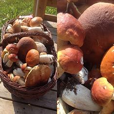 Sienet korissa.JPG