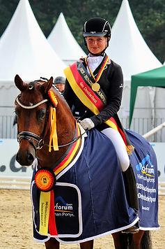 German Riding Pony, German Riding Pony Stallions, German Riding Ponies