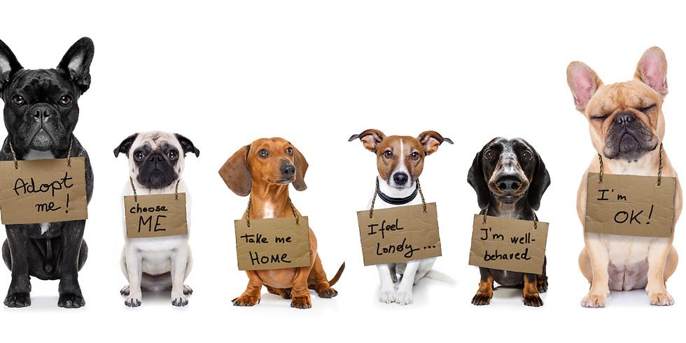 Tierschutzhunde ABC