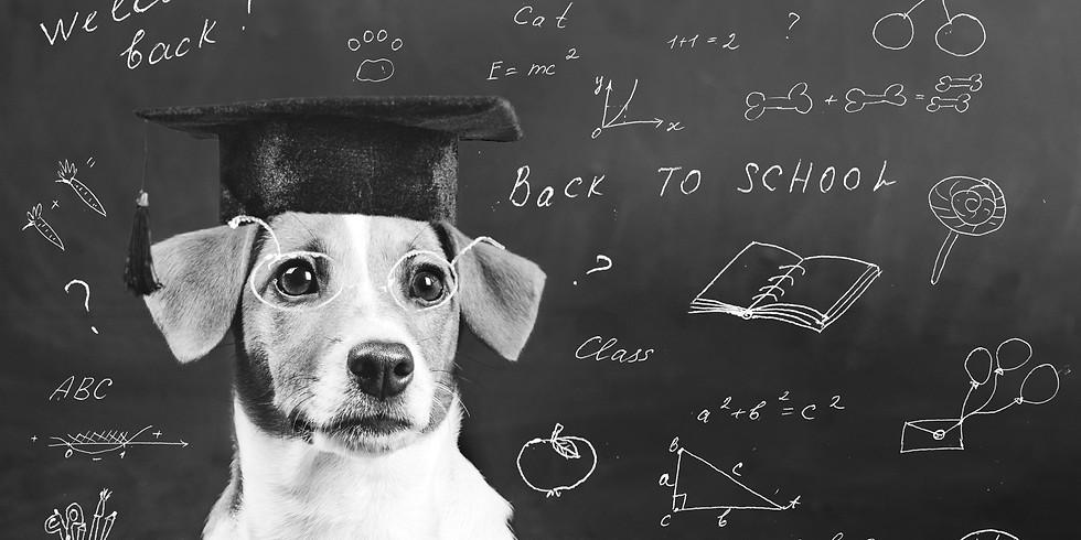 Beratung & Erstanalyse für Tierschutzhund & Problemfelle