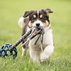 Hundespielwiese Leinen Los