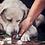 Thumbnail: Gutschein Haustiershooting