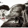 Wir & Die Hundsviecherl