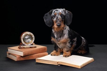 Hunde & Haustierfotografie