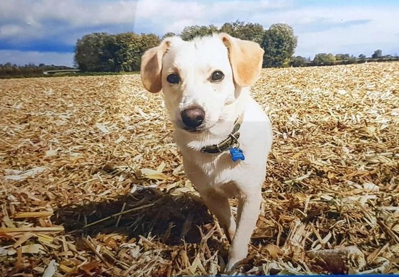 Screenshot_2019-12-30 Unsere Hundsvieche