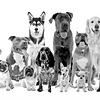 Die Hundsviecherl