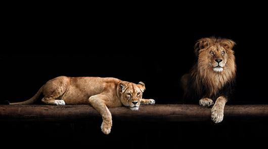 Zoo & Wildlifefotografie