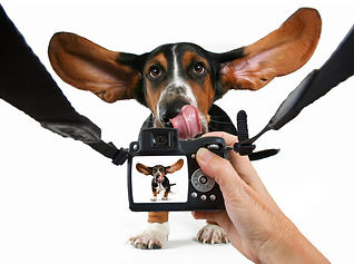 Fotoshooting Hundespielwiese