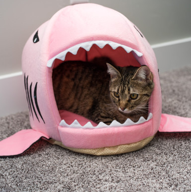 Pink Shark Bed