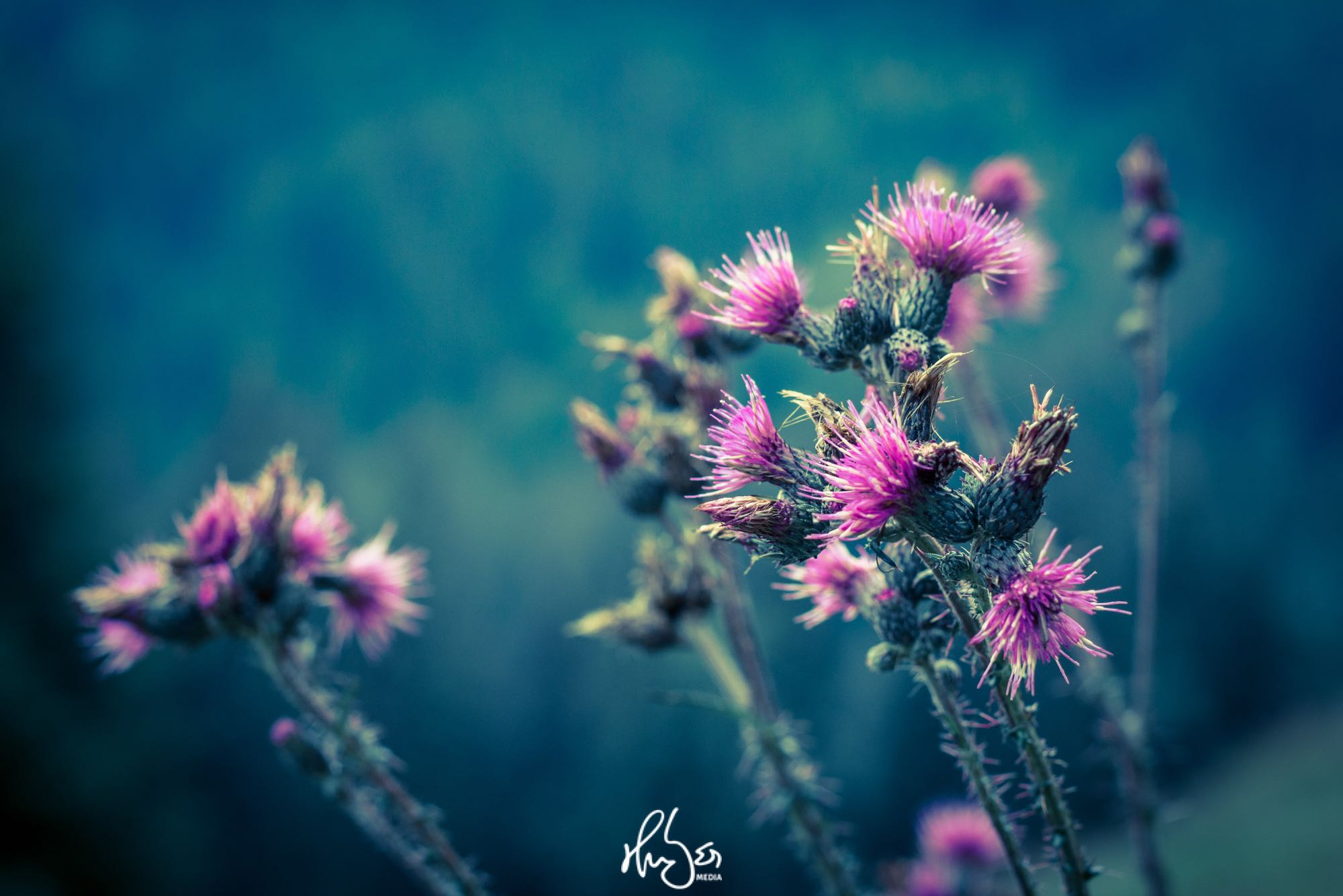 HUBER Media | Pflanzenwelt