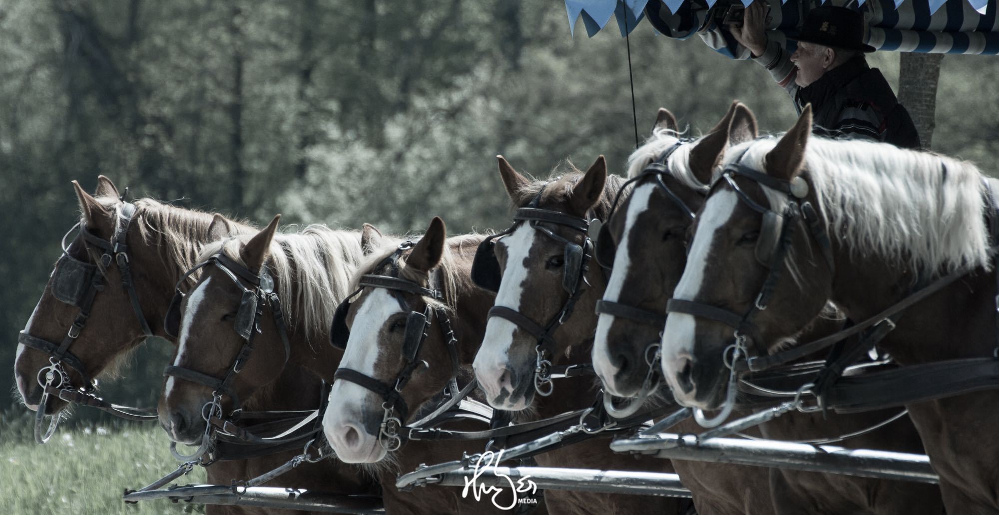 HUBER Media | Pferdekutsche