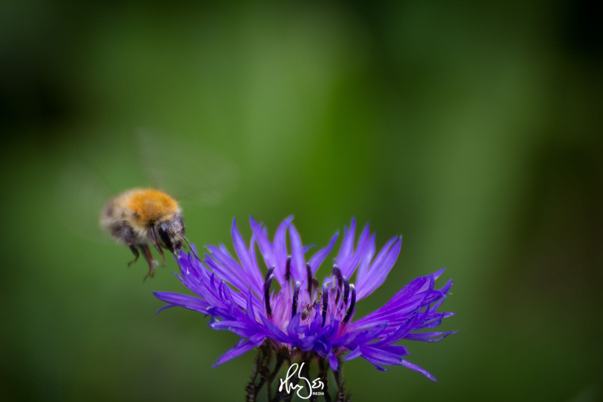 HUBER Media | Insekt