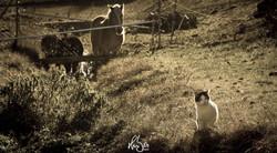 HUBER Media | Katze mit Pferden